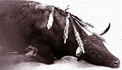 10 dingen die je moet weten over het dateren van een stier zal raids hebben matchmaking