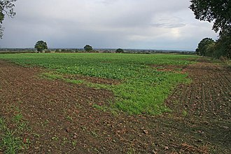 Battle of Stoke Field - The top of Rampire Hill, the Yorkist position at the start of the battle