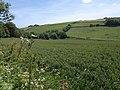 Stokeley valley - geograph.org.uk - 1358512.jpg