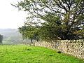 Stone Wall - geograph.org.uk - 48745.jpg