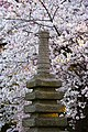 Stone lantern among cherry blossoms - Washington DC - 2014-04-10 (13773245674).jpg