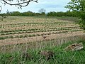 Strawberry fields. - geograph.org.uk - 162173.jpg
