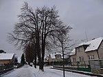 Suchdol - stromořadí lip srdčitých v Gagarinově ulici na Budovci (3).jpg