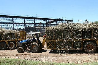 Migori County - Image: Sugarcane in Migori