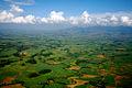 Sugarcane plantations Bacolod Philippines.jpg