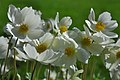 Summer Anemones (4660218433).jpg