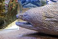 Sunshine international aquarium, Tokyo, Japan (281209598).jpg