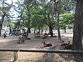 Taman Nara.jpg