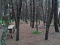 Taman Pinus.jpg