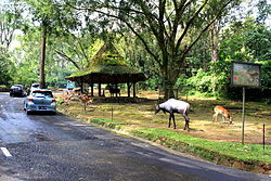 Taman Safari Indonesia.JPG
