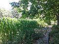Tarla Sığır yolu ceddesi - panoramio.jpg