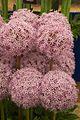 Tatton Park Flower Show 2014 032.jpg