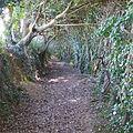 Tea Garden Footpath. - panoramio.jpg