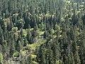 Tenaya Canyon 08438.JPG
