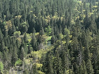 Ecology of the Sierra Nevada - Riparian habitat (riverine wetland) alongside Tenaya Creek.