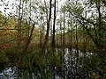 Teufelsbruch swamp next to crossing path in summer 17.jpg