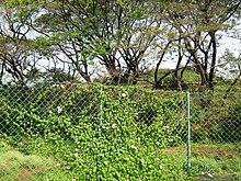 Fence - Wikipedia