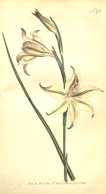 The Botanical Magazine, Plate 272 (Volume 8, 1794).png