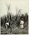 The Cuba review (1914) (14762286504).jpg