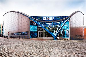 National Sea Life Centre (Birmingham) - The National SEA LIFE Centre Birmingham is home to over 2,000 creatures from around the world. The Centre also houses the UK's only 360 degree ocean tunnel.