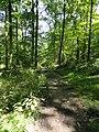 The Sourland Mountain Preserve, Hillsborough, New Jersey, USA June 2012 - panoramio (4).jpg