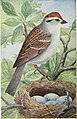 The bird book - illustrating in natural colors more than seven hundred North American birds; also several hundred photographs of their nests and eggs (1915) (14753253234).jpg