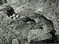 The birds of the British Isles and their eggs (1919) (14569066710).jpg