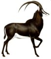 The book of antelopes (1894) Hippotragus niger I white background.png