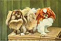 The book of dogs; an intimate study of mankind's best friend (1919) (20208797470).jpg