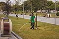 The gardener watering the lawn.jpg