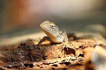 The silence of chameleon.jpg