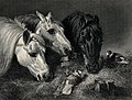 Three horses eating from a manger with two birds sitting on Wellcome V0020682.jpg