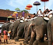 Thrippunithura-Elephants9 crop