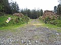 Timber stacks in Ravensdale Forest - geograph.org.uk - 446725.jpg