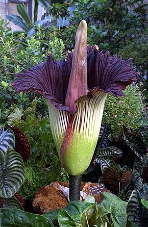 Les 20 Plantes Les Plus Rares Du Monde Madorre