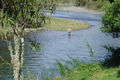 Tongariro River (2).JPG