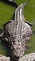 Torremolinos - Crocodile Park3.jpg