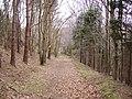 Track, Spring Wood West - geograph.org.uk - 395938.jpg