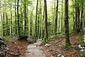 Trail to Savica Fall 3.jpg