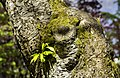 Tree Trunk with shoot (8665034264).jpg
