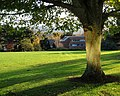 Tree near Innovation Centre - geograph.org.uk - 1040764.jpg