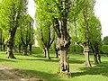 Trees - Frederiksberg Have - Copenhagen - DSC08928.JPG