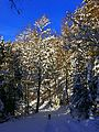 Trees In Winter - panoramio.jpg