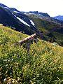 Trip 11-0911 Mt Baker skiing - 27 (6499116603).jpg