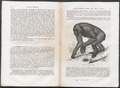 Troglodytes gorilla - 1700-1880 - Print - Iconographia Zoologica - Special Collections University of Amsterdam - UBA01 IZ19800175.tif