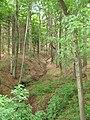 Tužínský potok, v lese.jpg