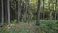 Tula YasnayaPolyana asv2019-09 img14 woods.jpg