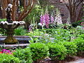 Typical Savannah Garden.jpg