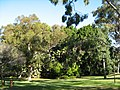 UWA 2008 gardens tropical grove.jpg