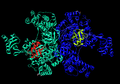 Ubiquitin-activating enzyme bound to Ubiquitin.png